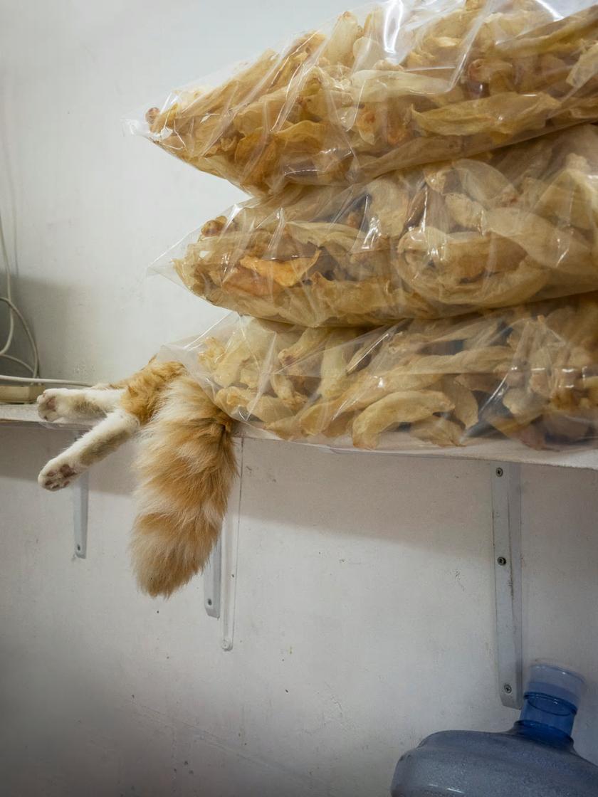 hong-kong-shop-cats-6