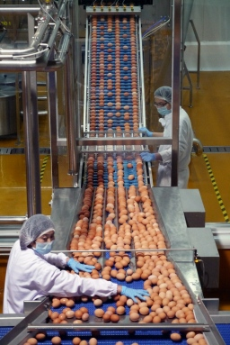 Workers checking eggs at the Beijing CP Egg Industry Company, which is invested by the Charoen Pokphand Group.