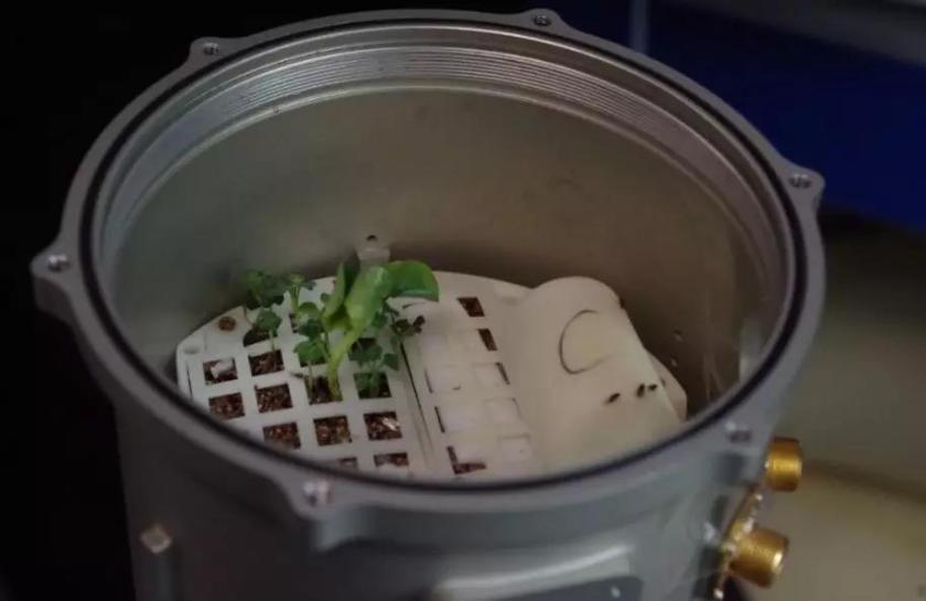 棉花種子已成功長出嫩芽,是月球的第一株植物2.jpg